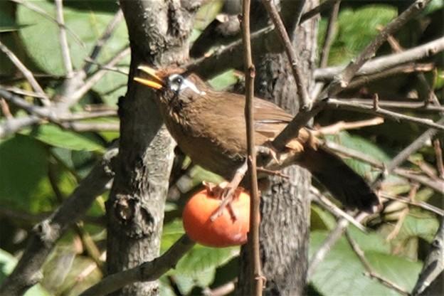 柿の実の熟する頃