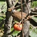 Photos: 柿の実の熟する頃