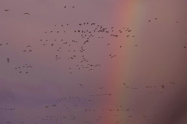 虹の向こうに…