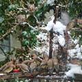 雪 でした・・・