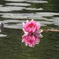Photos: 照南湖