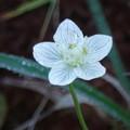 Photos: 高嶺の花