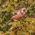 Photos: 紅い鳥・・・