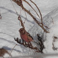 Photos: 雪のち快晴・・・