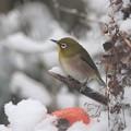 Photos: 雪の季節・・・