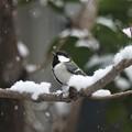 Photos: また 雪が・・・