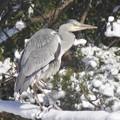Photos: 雪景色