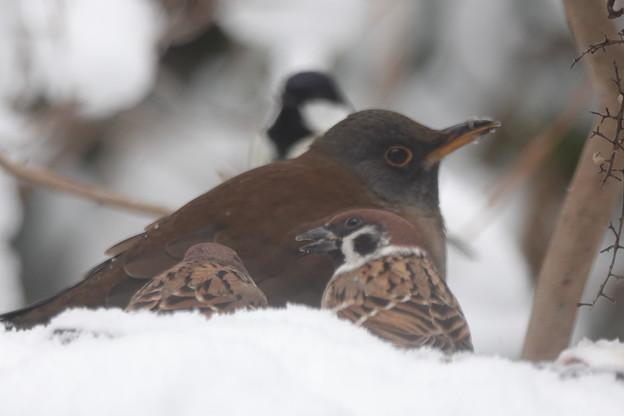 Photos: 雪の庭先・・・