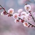 春風の記憶