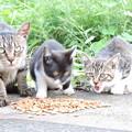 アメちゃんと子猫たち