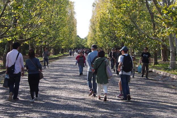 万博公園の並木道