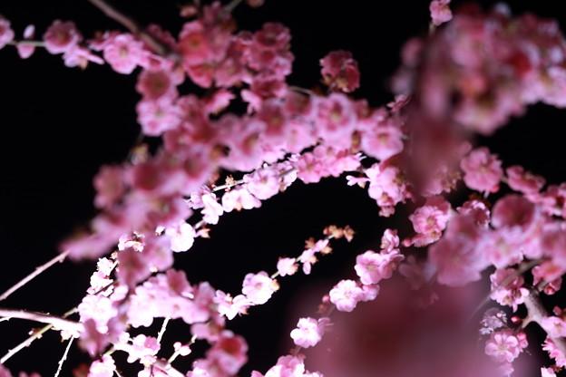 EOS_Kiss_8000D_18-03-17_0031