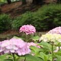Photos: EOS_8000D_20-06-14_0036