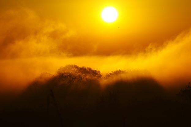 Photos: 朝霧と朝日
