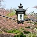 Photos: 2014_0412_143334_石塀小路