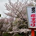 Photos: 2017_0409_155015 桜まつり