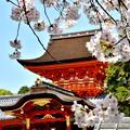 Photos: 2018_0331_111055 石清水八幡宮