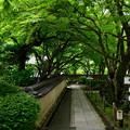 写真: 2018_0519_140816 化野念仏寺