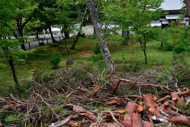 写真: 2018_0917_143421 南禅寺の倒木