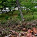 2018_0917_143421 南禅寺の倒木