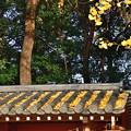 写真: 2018_1202_151614 河合神社