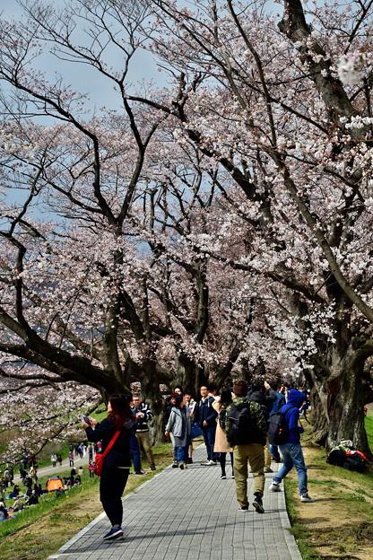 2019_0331_111942 桜のトンネル