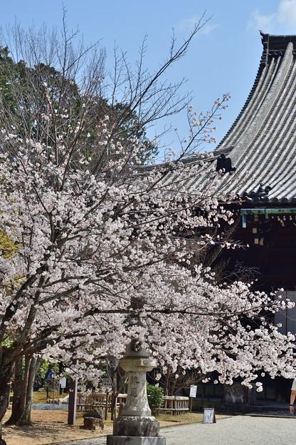 Photos: 2019_0406_120002 真如堂