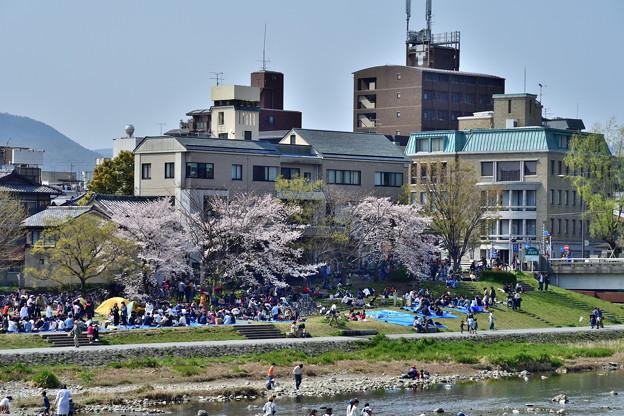 2019_0406_140541 お花見で賑わう出町柳の河川敷