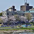 Photos: 2019_0406_140541 お花見で賑わう出町柳の河川敷