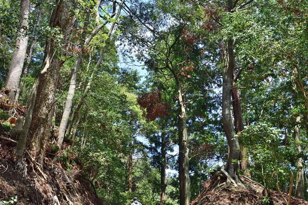 2019_0502_120713 樹木の枝が多数折れて空が明るくなった感じ