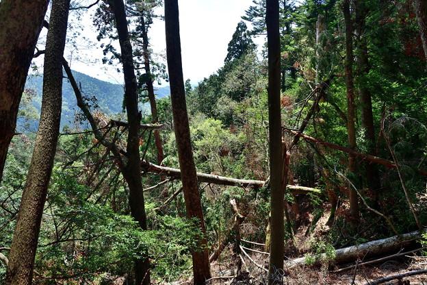 Photos: 2019_0502_120959 樹木はまだぐちゃぐちゃ