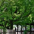 2019_0526_143019 東福寺