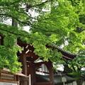 2019_0526_140218 東福寺
