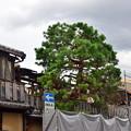 Photos: 2019_0721_144310 類焼