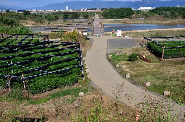 2019_1027_141426 八幡流れ橋