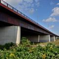 Photos: 2019_1027_134305 新木津川橋