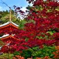 2019_1116_142622 今熊野観音寺