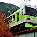 Photos: 2019_1124_133252_01 青モミジきらら