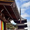 Photos: 2019_1130_122545 仁和寺