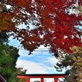 2019_1206_135012 下鴨神社