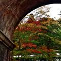 2019_1119_161321 南禅寺 水路閣と南禅院の紅葉