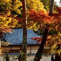 Photos: 2019_1119_160644 南禅寺