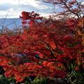 2019_1119_152022  熊野若王子神社