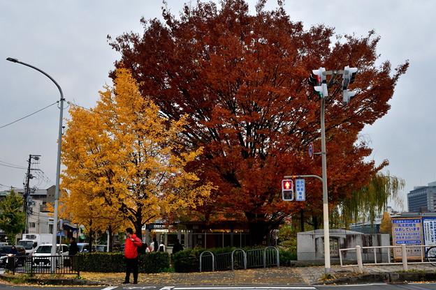 2019_1124_160735 神宮丸太町駅