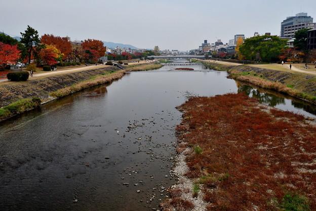 2019_1124_160905 丸太町橋から下流