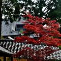 2019_1116_131110 東福寺