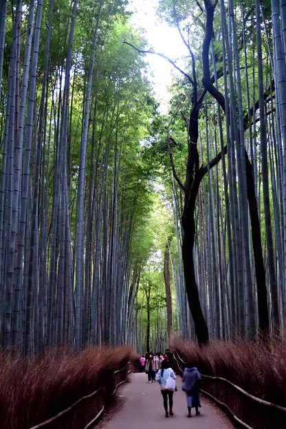 2019_1122_162343 竹林の小径
