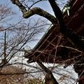 Photos: 2020_0126_130530 冬の真如堂