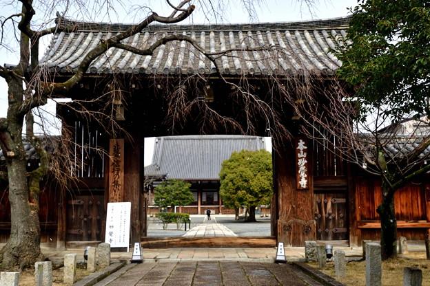 2020_0209_120259  妙覚寺