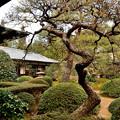Photos: 2020_0223_142710 お庭